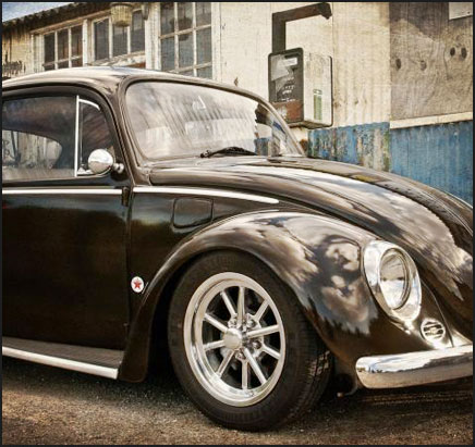 Brown Bug
